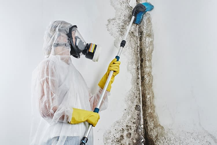 Mold Cleanup Services in Richmond Virginia by Heroes Restoration Inc.